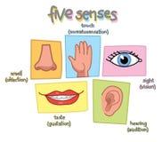 Pięć sensów wektorowych royalty ilustracja