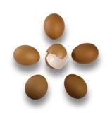 Pięć surowych brown jajek na białym tle Fotografia Stock