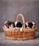 Pięć szczeniaków spać obraz royalty free