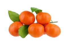 Pięć tangerines na jeden gałąź z zielonymi liśćmi na białym tle odizolowywali zbliżenie fotografia royalty free