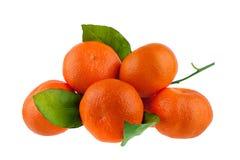 Pięć tangerines na jeden gałąź z zielonymi liśćmi na białym tle odizolowywali zbliżenie zdjęcie royalty free