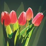 pięć tulipanów Zdjęcie Stock