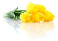 pięć tulipanów kolor żółty Fotografia Royalty Free