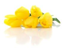 pięć tulipanów kolor żółty Zdjęcia Royalty Free