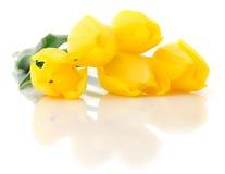 pięć tulipanów kolor żółty Obraz Royalty Free