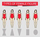 Pięć typ żeńskie postacie, wektorowy wizerunek royalty ilustracja
