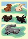 Pięć wektorowych królików Fotografia Stock