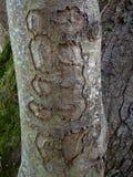 Pięć wzorów na drzewie Zdjęcia Stock