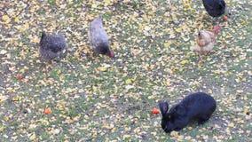 Pięć zwierząt w jesiennym ogródzie zbiory