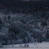 Pięćdziesiąt cieni zima las zdjęcia royalty free