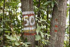 Pięćdziesiąt znak na drzewach obrazy stock