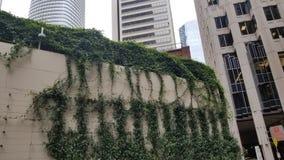Pięcie rośliny Na ulicie obraz stock