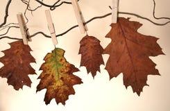 piękną jesień Zdjęcia Royalty Free