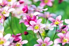 Piękna łąka kwitnie zbliżenie z plamy tłem Fotografia Stock