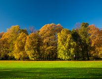 Piękna łąka w parku Obraz Royalty Free