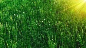 Piękna łąka z kwitnień ziele i kwiatami zdjęcie wideo