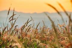 Piękna łąkowa trawa Obrazy Royalty Free