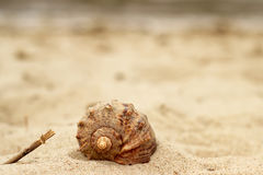 Piękna ślimaczek skorupa, zakończenia lying on the beach na żółtym piasku blisko morza Obrazy Royalty Free