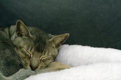 piękna śpi Zdjęcia Royalty Free