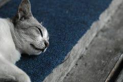 piękna śpi Obraz Royalty Free