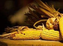 Piękna żółta kukurudza na plewie dla dziękczynienie projekta Fotografia Royalty Free