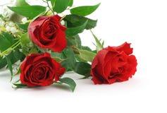 piękna 2 dekoracja maroona trzy róże Obrazy Stock
