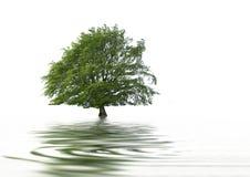 piękna abstrakcjonistyczny drzewo fotografia stock
