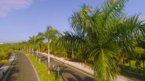 Piękna aleja w parku, karaibski kurort z kwiatami i palm drzewa, zbiory