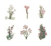 Piękna bajka ustawiająca kolorowi akwarela kwiaty 2 wyznaczonym przez ornamentu Obraz Stock