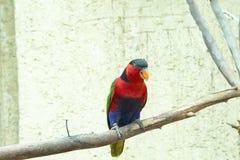 Piękna barwiona papuga siedzi na gałąź, ptak, zwierzę obrazy royalty free