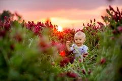 Piękna berbeć chłopiec w wspaniałym ciemnopąsowej koniczyny polu na zmierzchu Obrazy Royalty Free