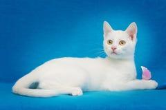Piękna biała figlarka z żółtymi oczami fotografia stock
