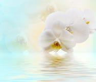 Piękna biała orchidea obraz royalty free