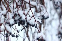 Piękna biała zima Śnieżny i mroźny fotografia stock