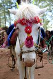Piękna białego konia przejażdżka Fotografia Royalty Free