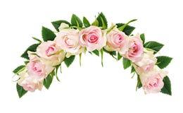 Piękna biel róża kwitnie i liście w łękowatym składzie Obrazy Stock