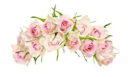 Piękna biel róża kwitnie w łękowatym przygotowania Fotografia Royalty Free