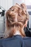 Piękna blondynki dziewczyna ma jej ostrzyżenie w fryzjerstwo salonie Obrazy Royalty Free