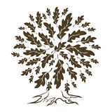 Piękna brown dębowego drzewa sylwetka odizolowywająca na białym tle Obrazy Stock