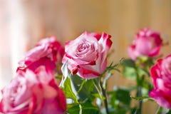 piękna bukieta kopii menchii róż przestrzeń Obraz Royalty Free
