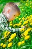 Piękna chłopiec otaczająca dandelions zdjęcia stock