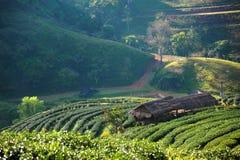 piękna chiangmai krajobrazu zima Zdjęcie Stock
