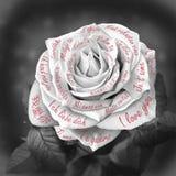 Piękna czarny i biały róża z słowami Fotografia Royalty Free