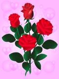 Piękna czerwieni róża Fotografia Royalty Free