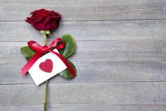 piękna, czerwona róża Obrazy Stock