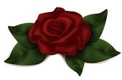 piękna, czerwona róża Zmrok różowy na wielką skalę Roos realistyczny Fotografia Stock