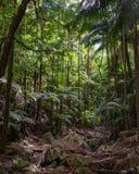 Piękna dżungla z drzewkami palmowymi obraz royalty free