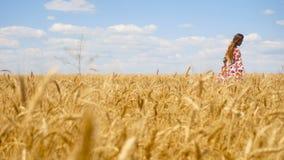 Piękna dama z długie włosy iść pszeniczny pole zbiory wideo