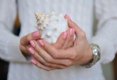 Piękna denna skorupa w rękach Zdjęcie Royalty Free