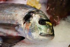 Piękna dennego leszcza ryba z kolorowym waży i świeży oko Zdjęcia Stock